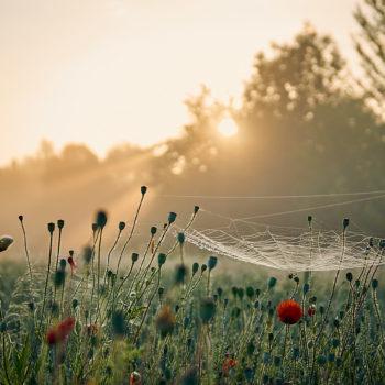 Feld am Kanal im Morgenschein