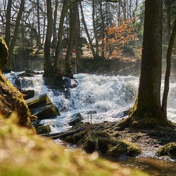 Selkefall im Harz